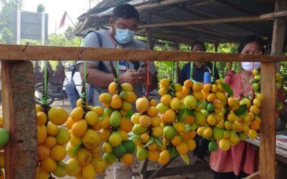ยโสธรชาวบ้านเก็บลูกยางป่าไปขายเป็นรายได้ในช่วงหน้าแล้ง
