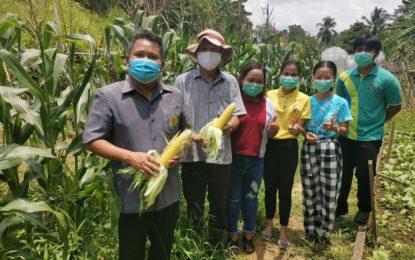 วิทยาลัยเกษตรพังงานำผลผลิตทางเกษตรจำหน่ายราคาถูกช่วยชาวบ้าน สู้โควิด-19 ทุกวันพฤหัส -ศุกร์