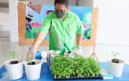 จังหวัดสระบุรีขับเคลื่อนปรัชญาเศรษฐกิจพอเพียงปลูกผักสวนครัวเพื่อสร้างความมั่นคงทางอาหาร