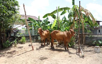 รมช.เกษตรและสหกรณ์ ลงพื้นที่จังหวัดกาฬสินธุ์ เร่งติดตามให้การช่วยเหลือดูแลเกษตรกร หลังเกิดโรคลัมปีสกินระบาดในโค-กระบือ ในพื้นที่มีสัตว์ตาย 338 ตัว เกษตรกรได้รับผลกระทบกว่า 5,500 ราย