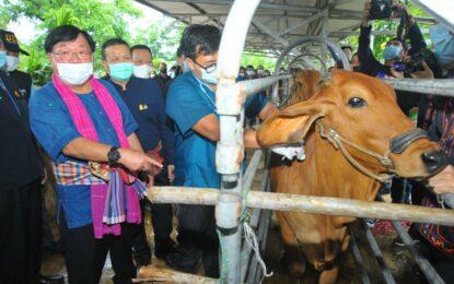 รมช.เกษตรฯ Kick off ฉีดวัคซีนโรคลัมปี สกิน ที่ จ.กาฬสินธุ์
